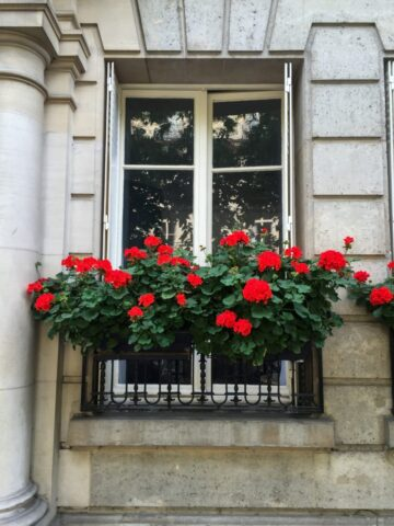 Flower-filled window boxes