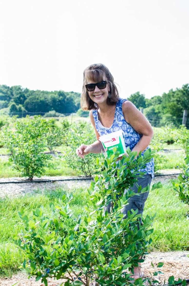A red-headed woman standing outside picking blueberries from a bush.