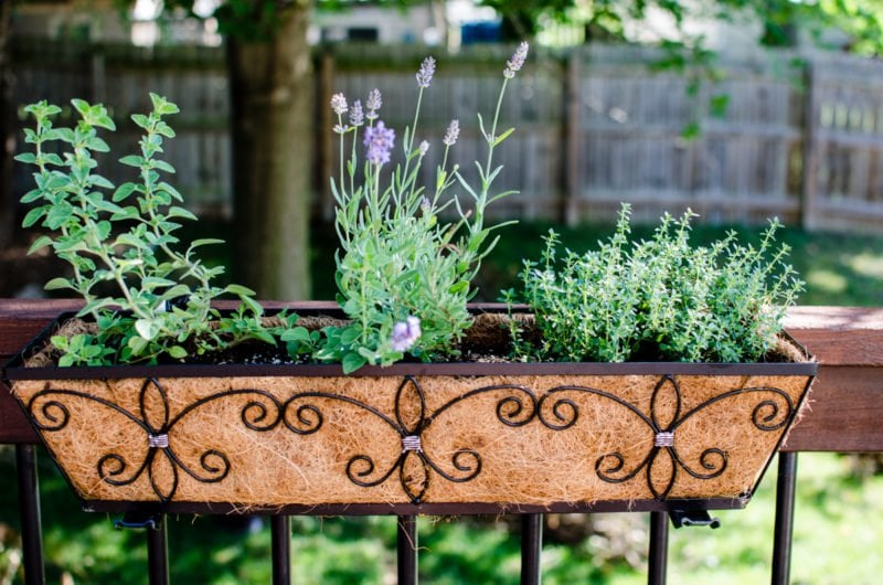 Learn how to keep track of what's in your garden and yard in this DIY tutorial for a home garden journal.