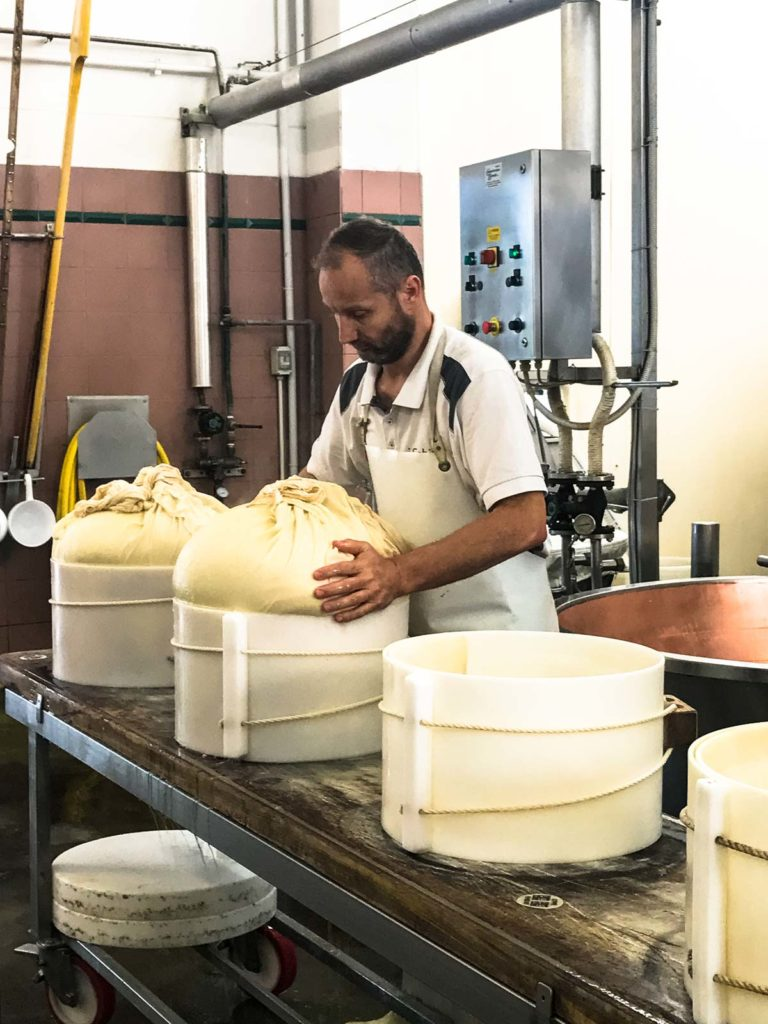 A man molding rounds of Parmesan cheese in a cheese factory in Italy.