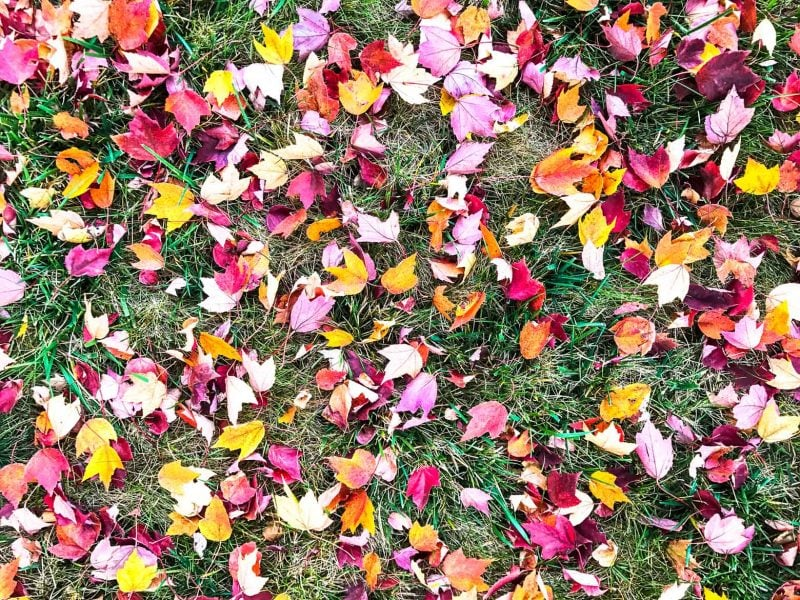 Pretty pictures of fall leaves + an update on my move to TN!