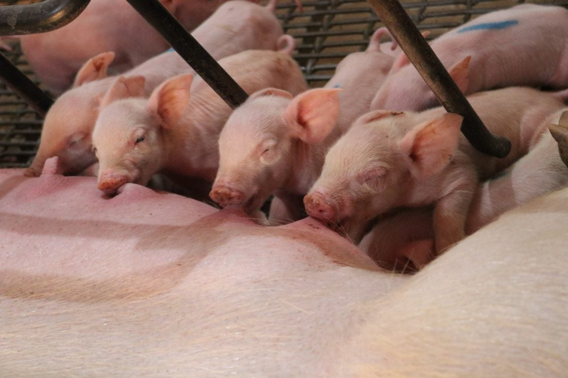 Scenes from the farm tour I took in Minnesota with the National Pork Board - RD Farm Tour