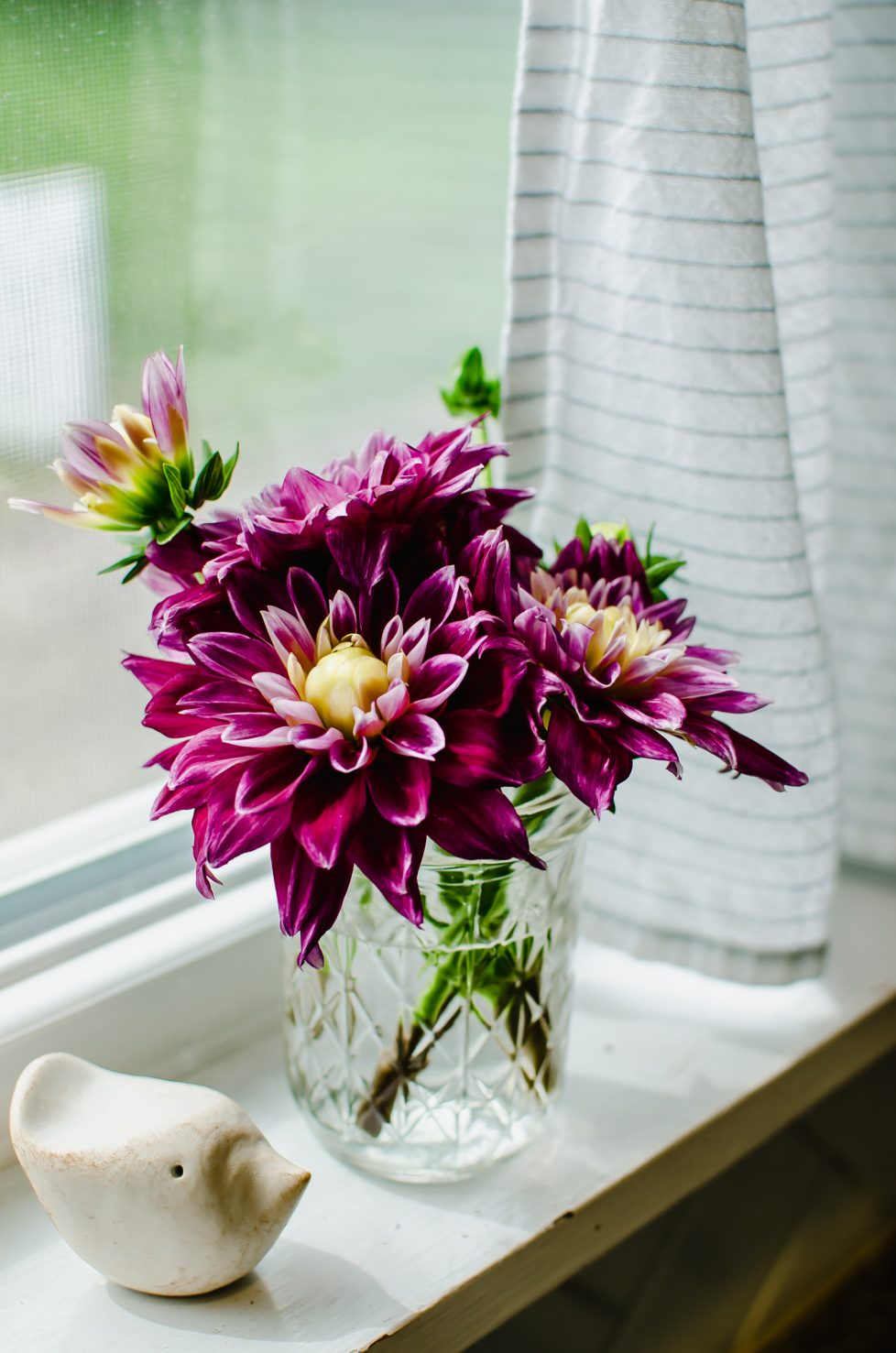 A photo of fuchsia dahlia flowers in a mason jar vase sitting on a window sill.