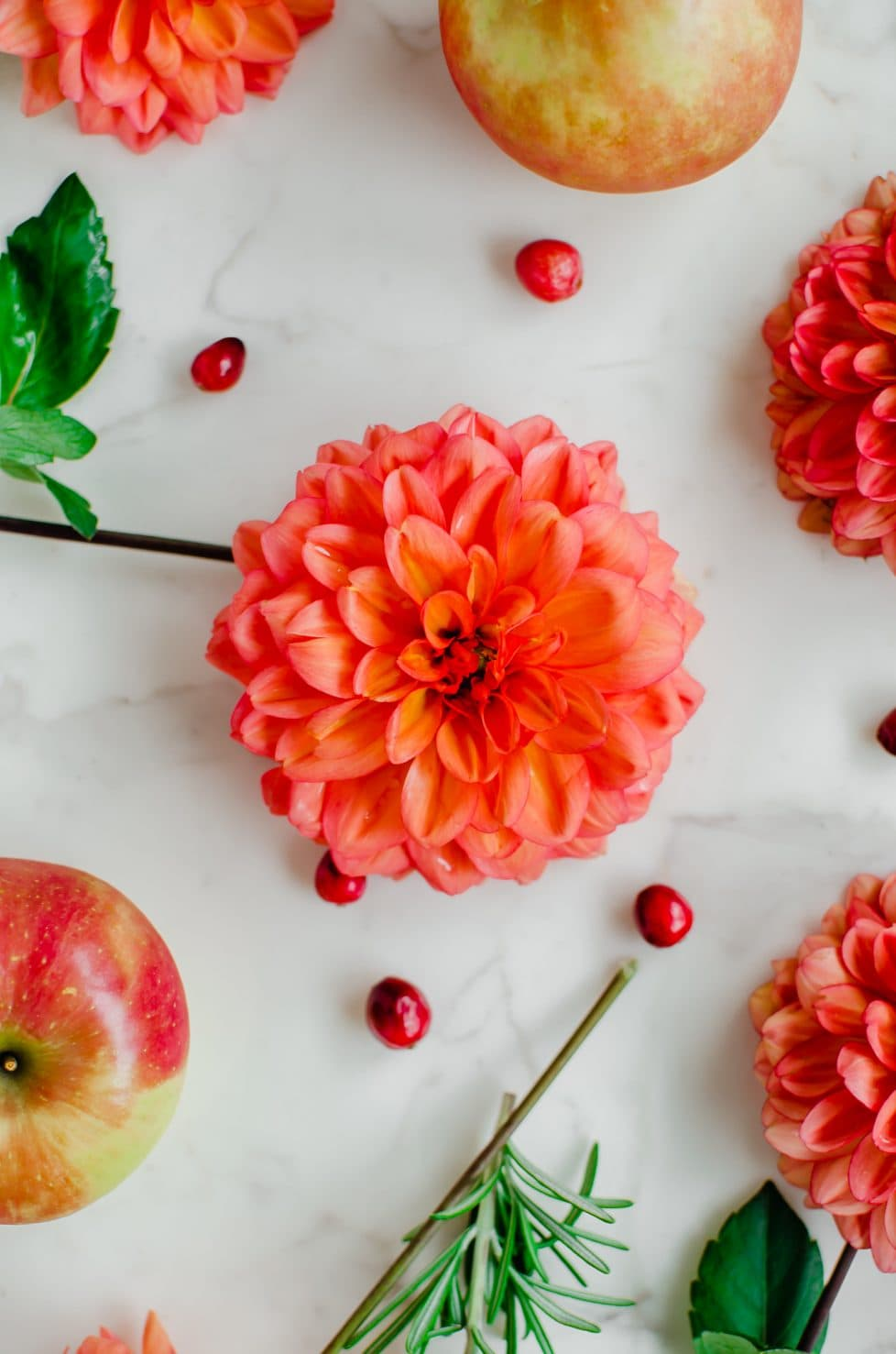 Dahlia flowers laid on a white counter top with apples, rosemary, and fresh cranberries.